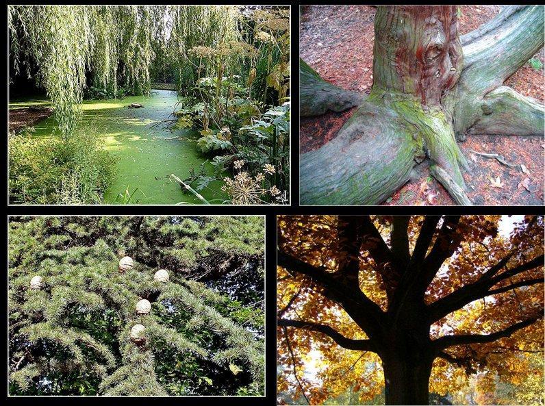 nancy arbres du parc sainte marie troncs et corces. Black Bedroom Furniture Sets. Home Design Ideas